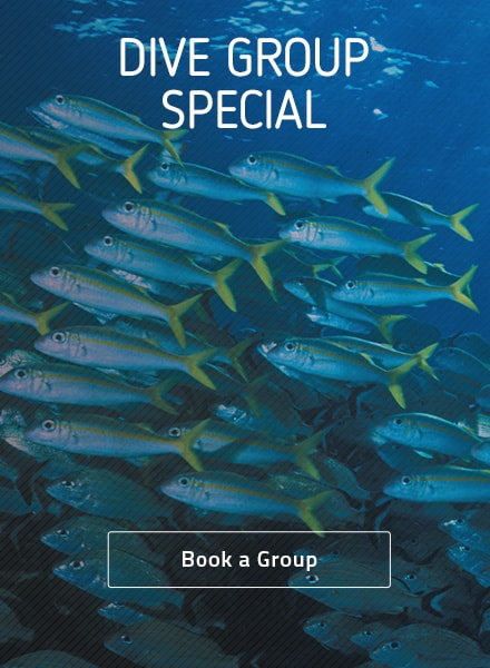 dive group ad